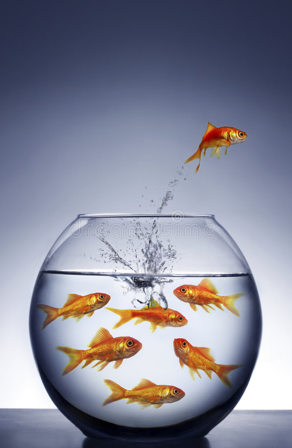 Goldfish jumping out of the water stock image