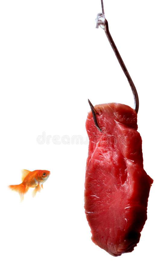 Goldfish looking at the bait. Isolated on a white background stock photo