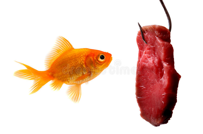 Goldfish looking at the bait stock photo