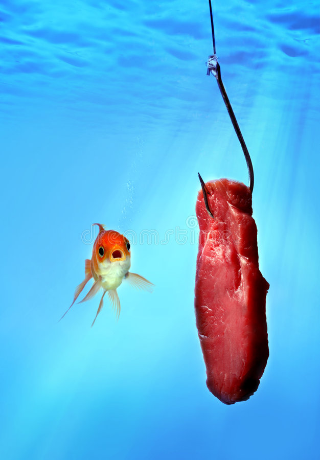 A goldfish with meat stock photo
