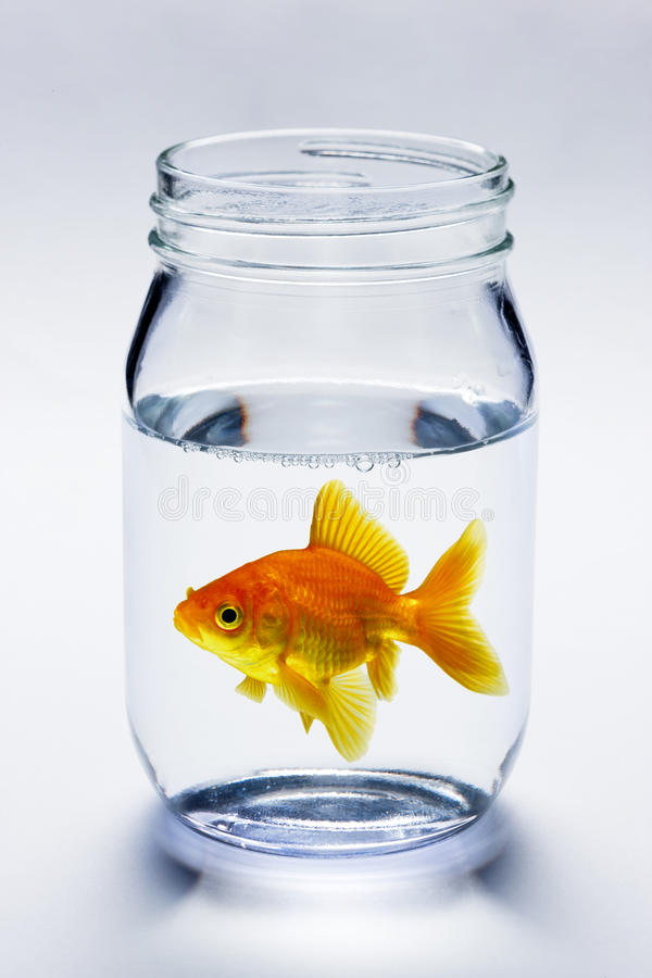 Goldfish no frasco imagem de stock royalty free