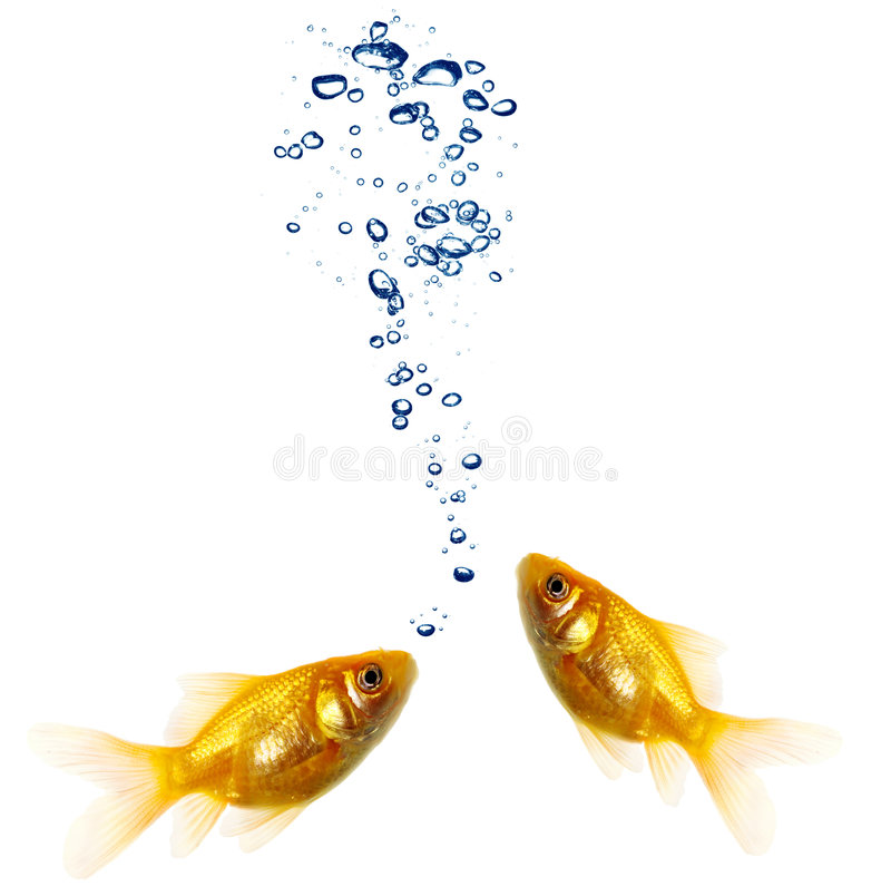 goldfish para obrazy stock