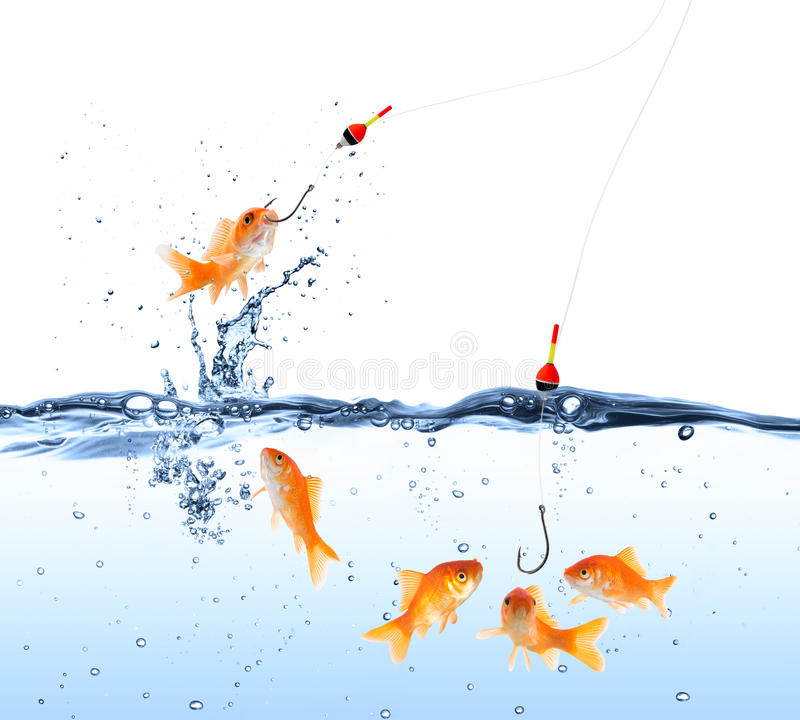 Goldfish popas fotografia royalty free