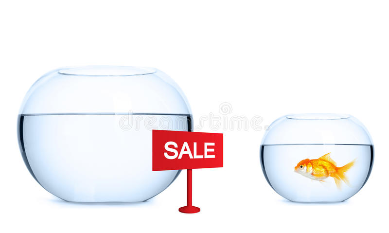 Goldfish przygotowywa skakać w nowego akwarium zdjęcia stock