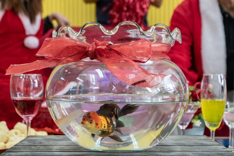 Goldfish in a round aquarium. Decor xmas party room royalty free stock image