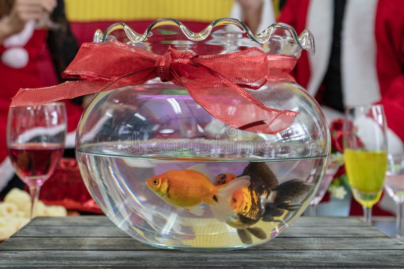 Goldfish in a round aquarium. In party room royalty free stock photography