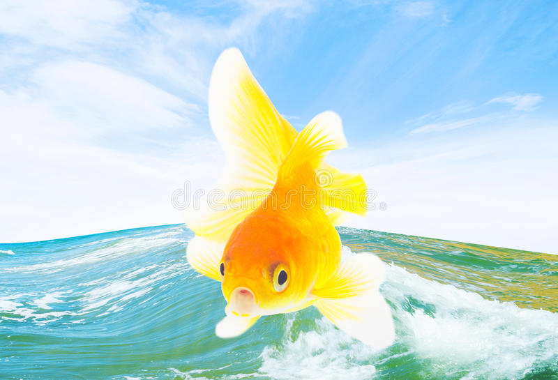 Goldfish and sea stock image