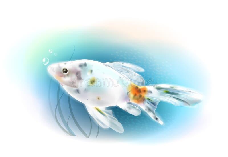 Goldfish in the sea. Aquarium fish. Realistic illustration stock illustration