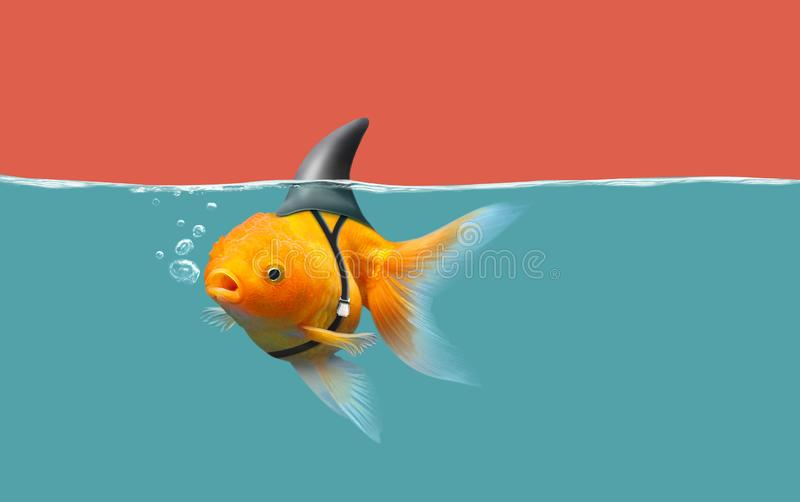Goldfish with shark fin swim in green water and red sky, Gold fish with shark flip . Mixed media. Copy space stock images