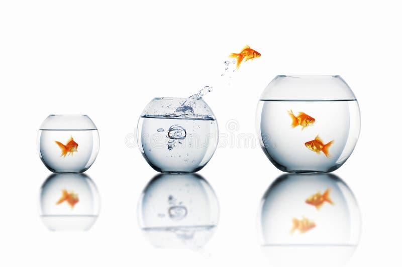 Goldfish skacze obraz royalty free