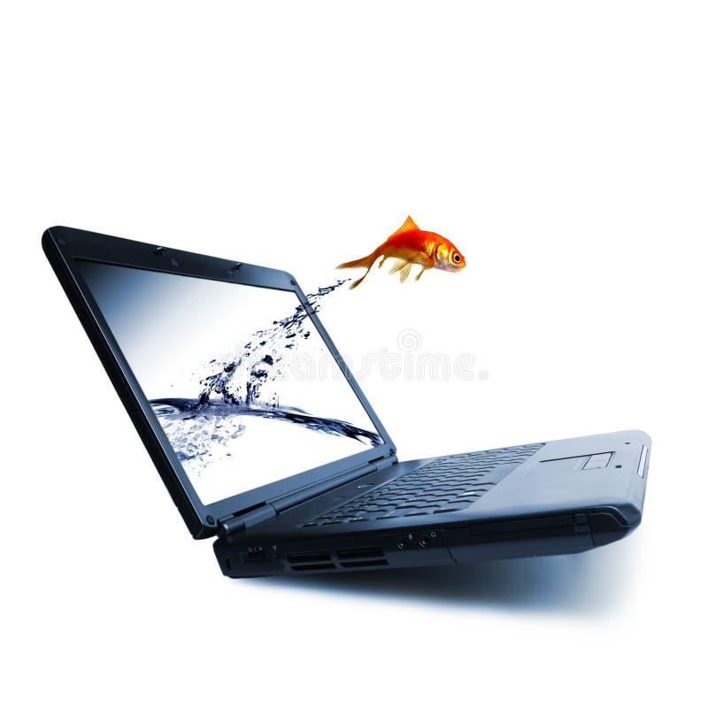 Goldfish springen stockbilder