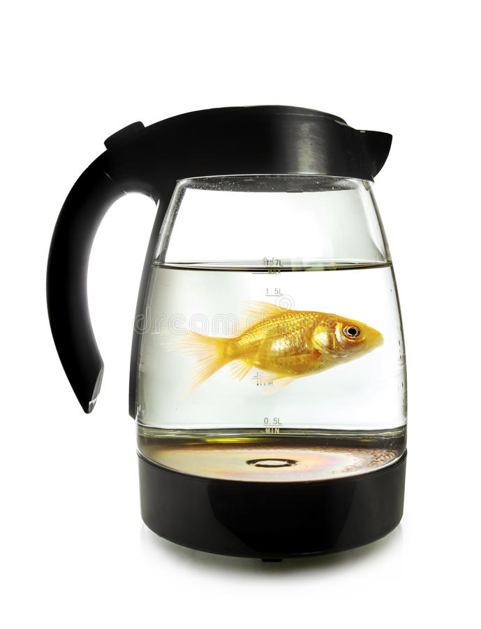 Goldfish swimming around in an electric kettle on white background. Goldfish swimming around in an electric kettle, isolated on white background stock photo