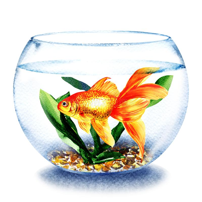Goldfish swimming in the water in transparent round glass bowl, fish in aquarium, comfort zone concept, hand drawn royalty free illustration