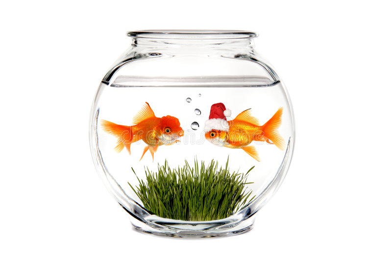 Goldfish Telling Santa What He Wants for Christmas royalty free stock photos