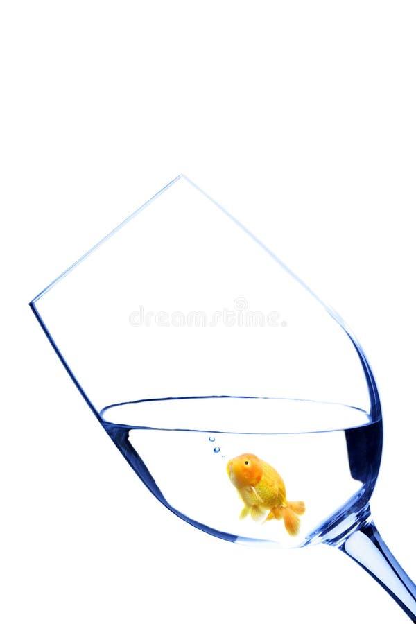 Goldfish in un vetro immagini stock libere da diritti