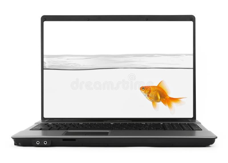 goldfish wśrodku notatnika zdjęcie royalty free