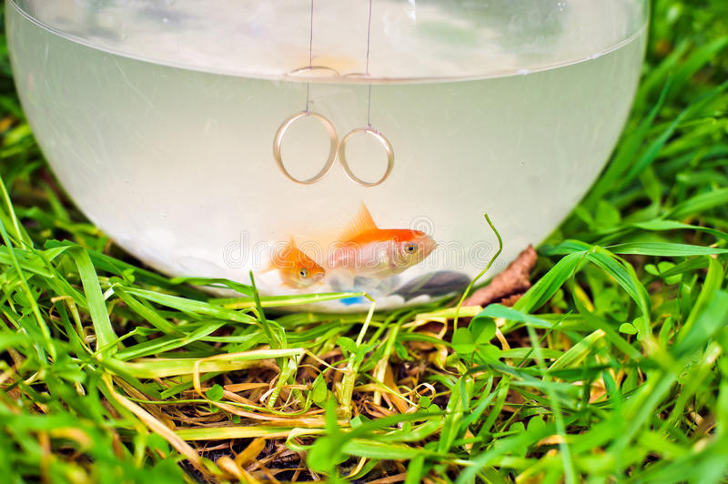 Goldfish w fishbowl obraz stock