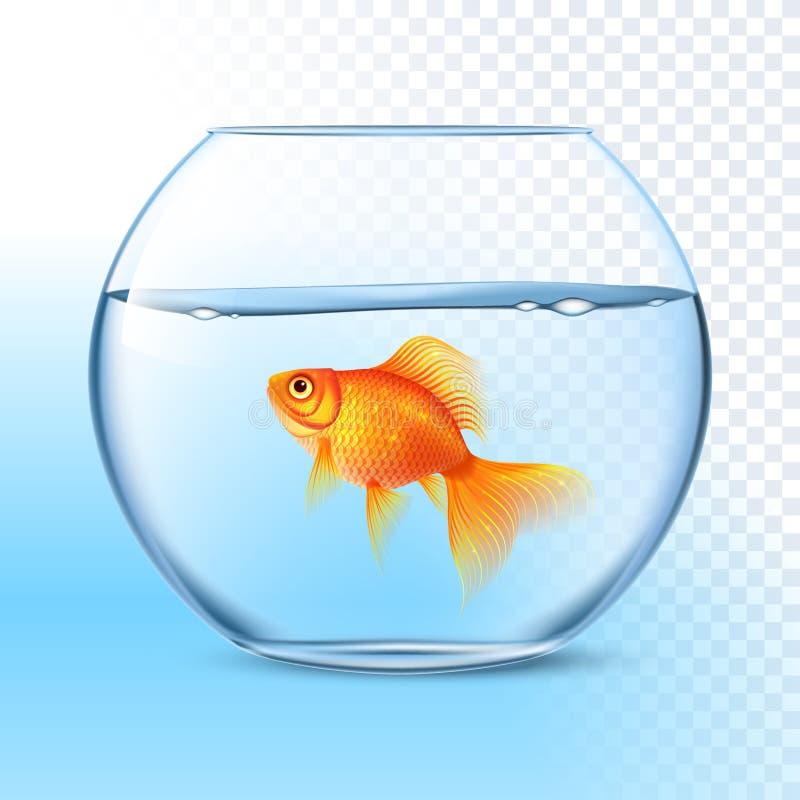 Goldfish In Water Bowl Realistic Image. Single goldfish swimming in transparent round glass bowl aquarium realistic image print vector illustration stock illustration