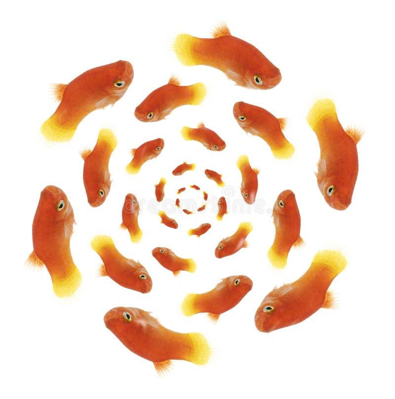 Goldfishes imagens de stock