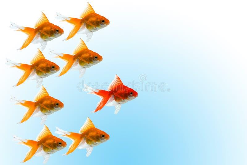 Goldfishes con la guida fotografia stock libera da diritti