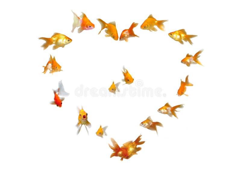Download Goldfishes (fondo En Forma De Corazón Del Marco) Foto de archivo - Imagen de macro, individual: 7282626