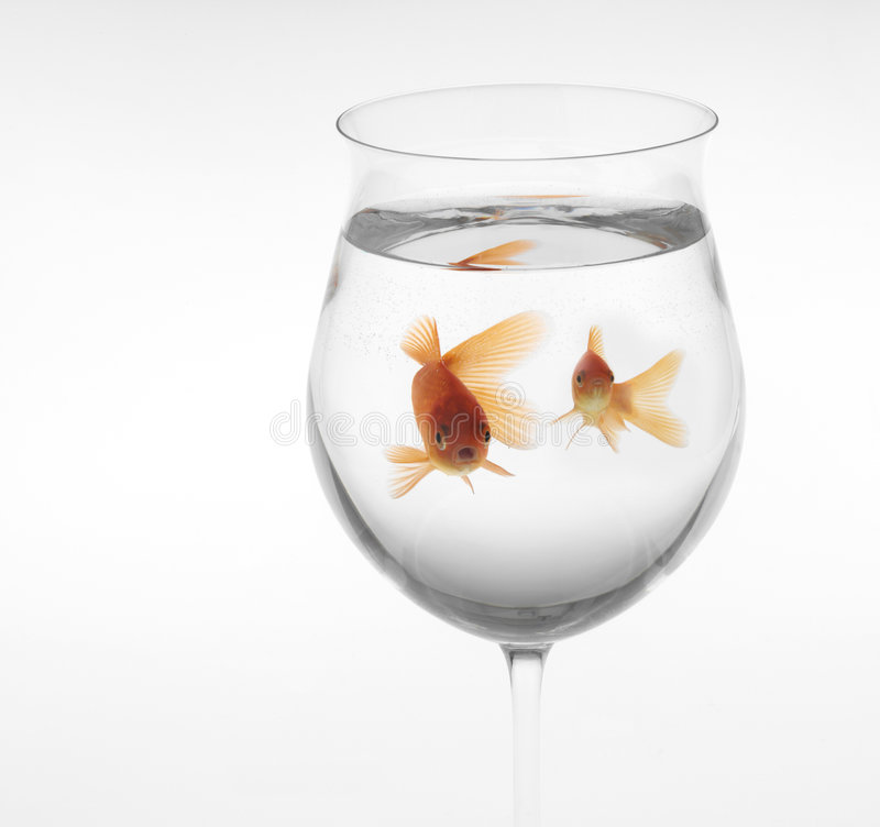 Goldfishes in a glass stock images