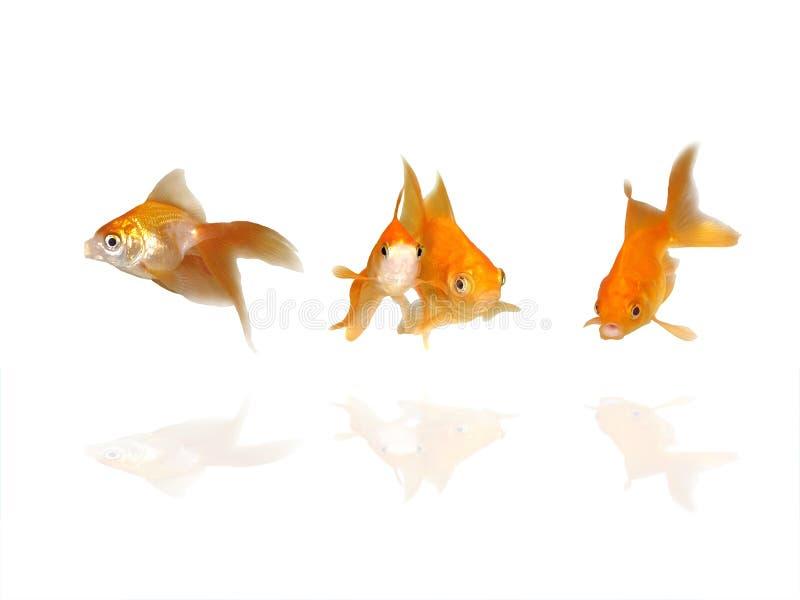 Download Goldfishes Hermosos Con Reflexiones Del Agua Foto de archivo - Imagen de macro, animal: 7282168