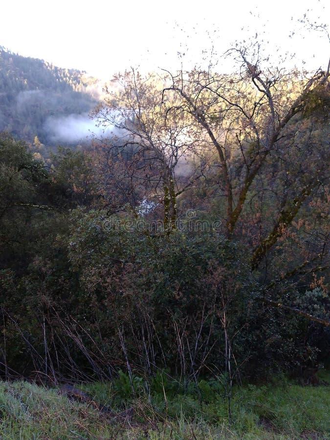 Goldland-Hügel stockbilder