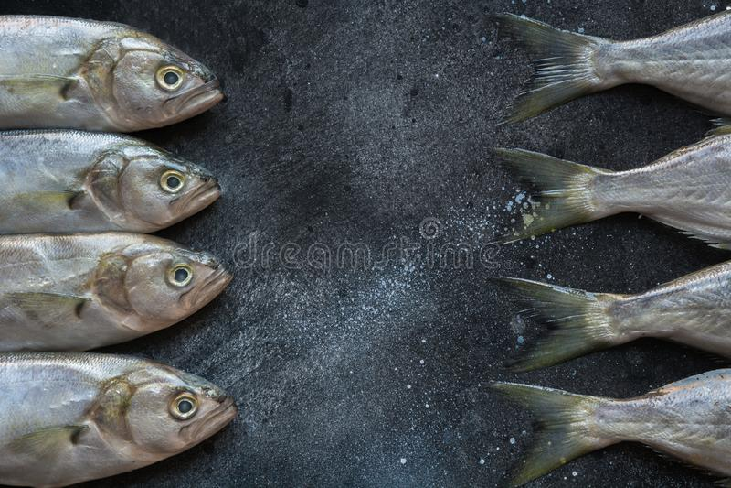 Goldmakrele Schwarzen Meers auf Schwarzem Fischmuster mit Raum für Text Ansicht von oben stockbild