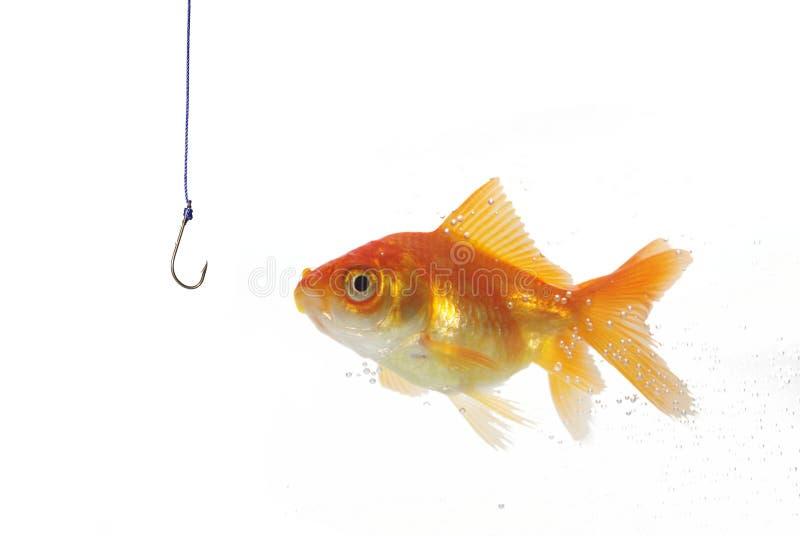 Golds ryba i opróżnia haczyka obrazy royalty free