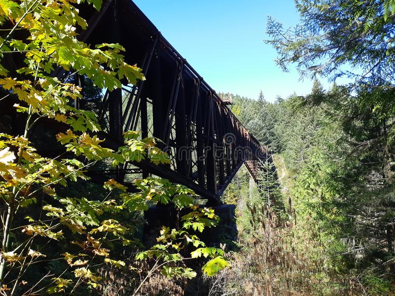 Cantilever style bridge in the forest royalty free stock photo