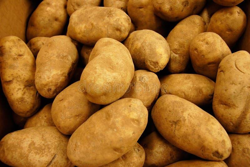 Goldtuch-Kartoffeln Lizenzfreie Stockbilder