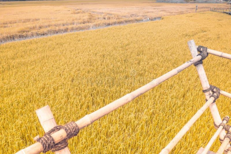 Goldweizen flog Panorama mit Baum bei Sonnenuntergang, ländliche Landschaft Vogelscheuchenstand auf dem Gebiet hölzerne Bambuster lizenzfreie stockbilder
