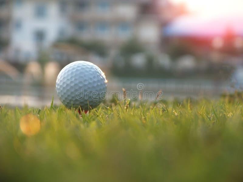 Golf auf dem roten T-Stück im grünen Rasen stockfotos