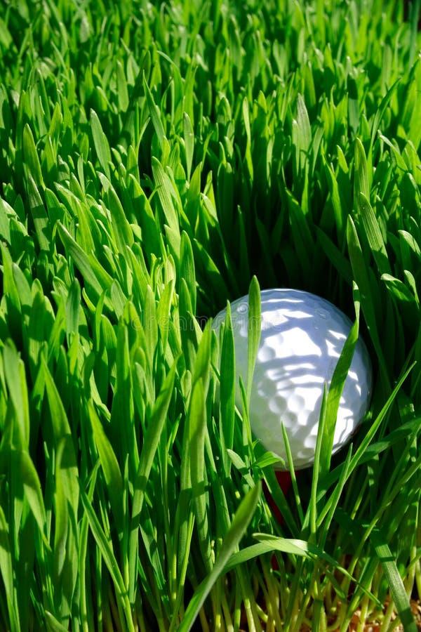 Download Golf Ball stock photo. Image of sport, ball, copy, stuck - 1121206