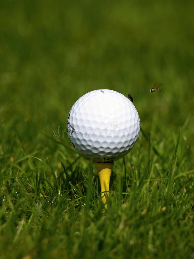Download Golf ball stock photo. Image of teewhite, ball, grass - 15590094