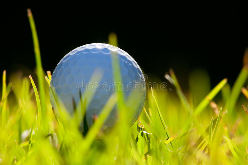 Golf ball. In a bad lie royalty free stock photo