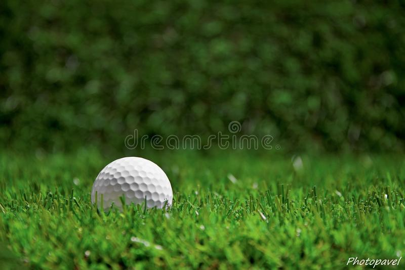 Golf-ball on course. A shot of Golf ball on tee stock photo