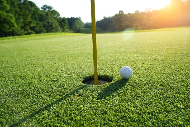 Golf ball on the edge of hole on the green grass. Golf ball on the edge of hole on putting green on golf course royalty free stock image