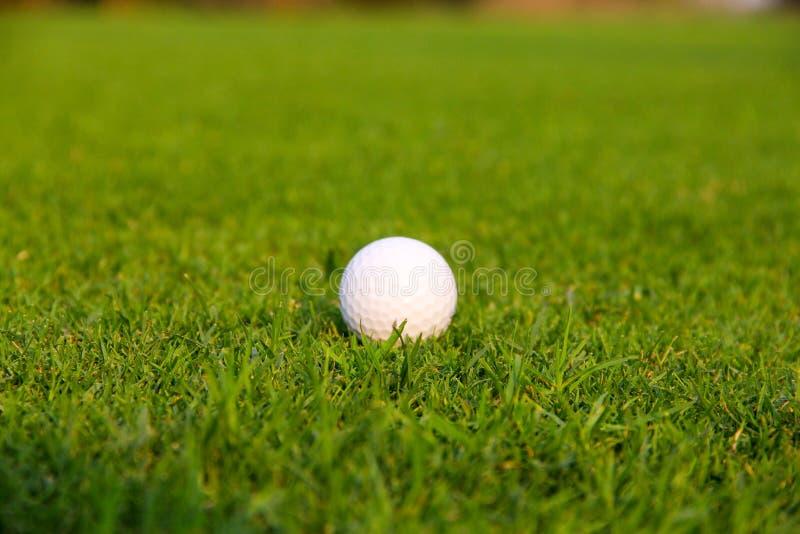 Golf ball on green. Grass royalty free stock photos