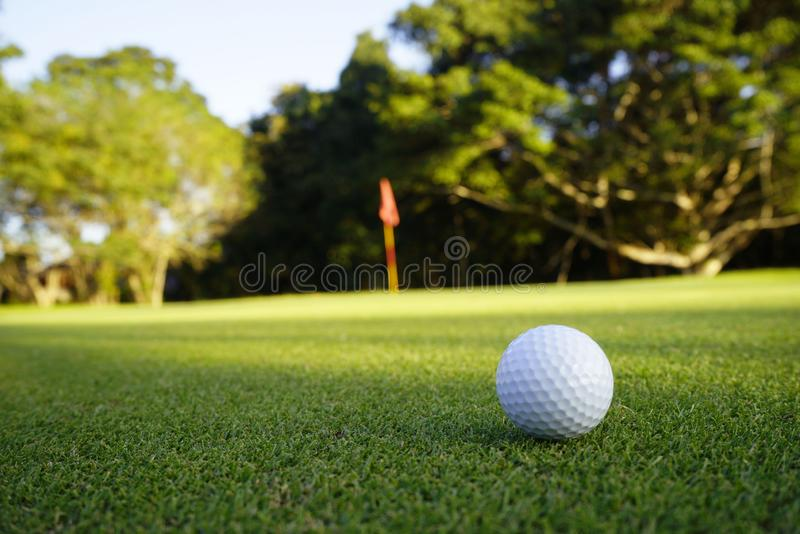 Golf ball on green in beautiful golf course at sunset background royalty free stock image