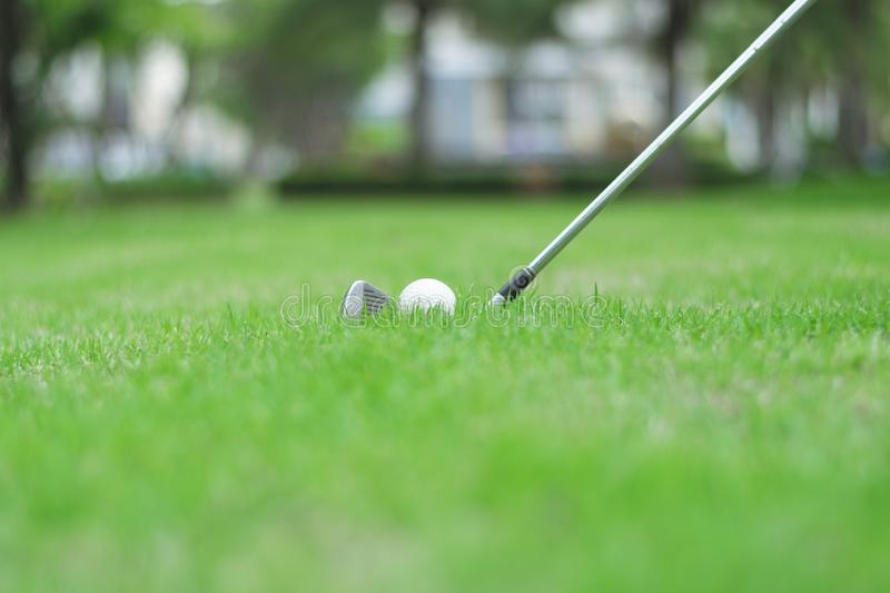 Golf ball on green grass in golf course. Close up to golf ball on green grass in golf course royalty free stock photo