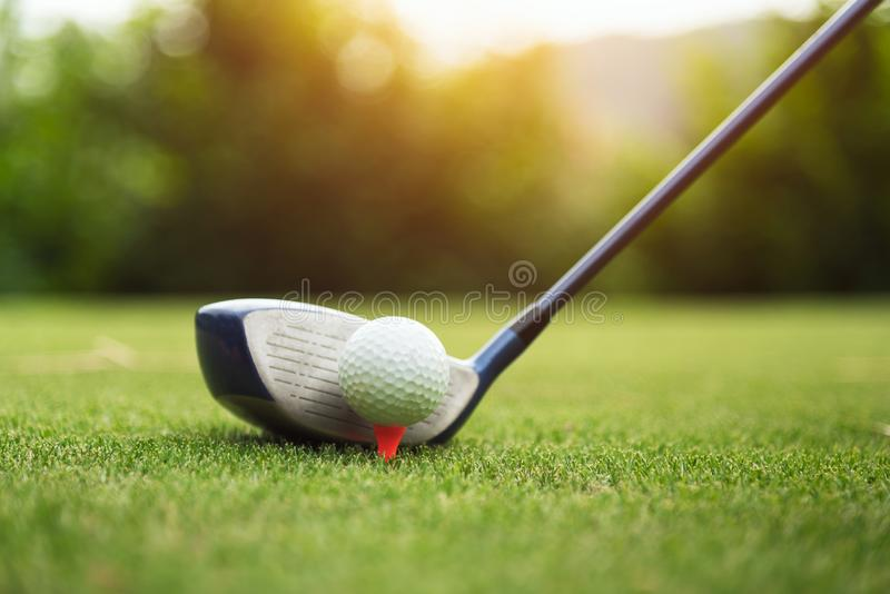 Golf ball on green grass ready to be struck. At golf club,close up in golf coures at Thailand stock photo