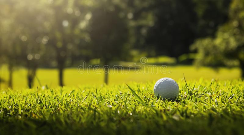Golf ball on green grass with sunlight. Lawn, object, cut, putting, equipment, playing, landscape, empty, point, natural, ground, lifestyle, shot, hobby, golf stock photo