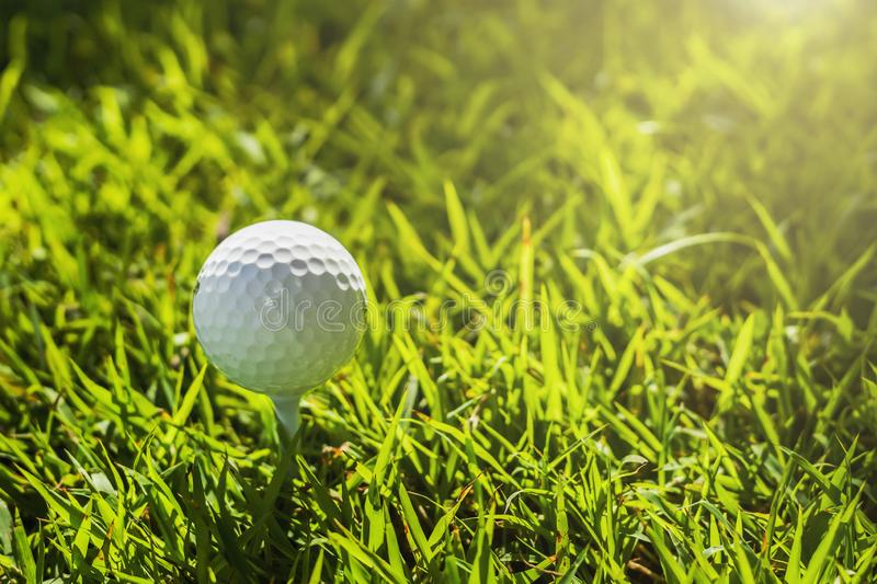 Golf ball on green grass with sunlight. Lawn, object, cut, putting, equipment, playing, landscape, empty, point, natural, ground, lifestyle, shot, hobby, golf stock photos