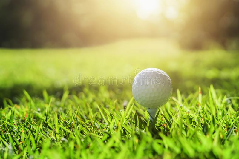 Golf ball on green grass with sunlight. Lawn, object, cut, putting, equipment, playing, landscape, empty, point, natural, ground, lifestyle, shot, hobby, golf stock photography