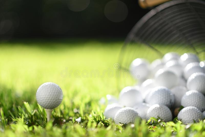 Golf ball on tee and golf balls in basket on green grass for practice stock images