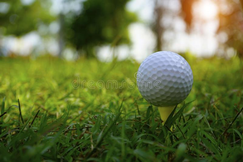 Golf ball on tee in beautiful golf course royalty free stock photography