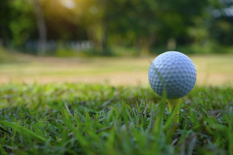 Golf ball on tee in beautiful golf course royalty free stock photos