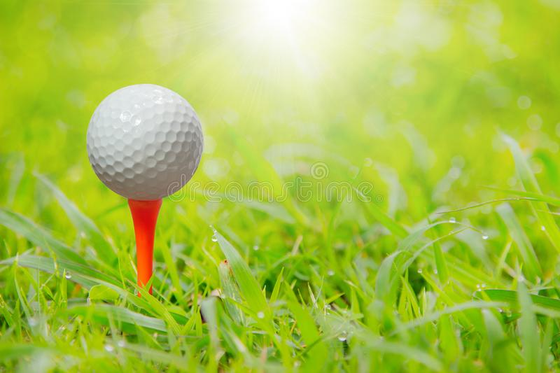 Golf ball on tee in front of driver ready to be shot on green gr royalty free stock photos